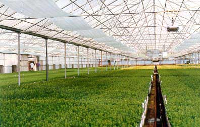 reforestation nursery