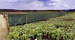 Field Crop Windbreaks