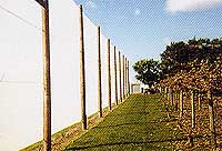 Agriculture Windbreaks
