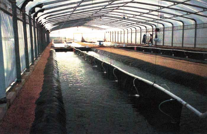 Aquaculture liners made of Permalon