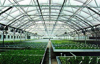 The Quonsetter greenhouse