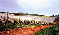 Vineyard Hail Protection