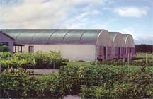 Quonset shade house