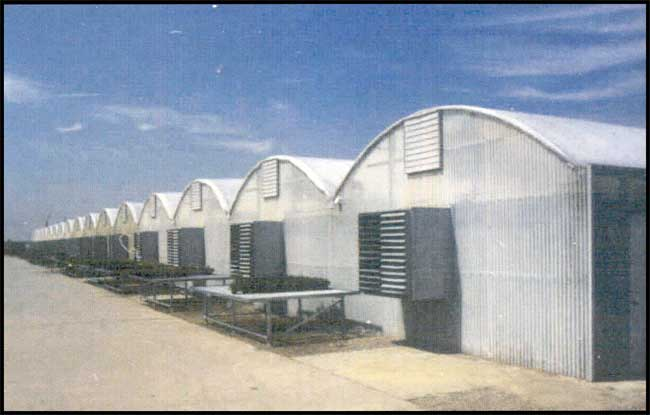 Quonsetter 3000 greenhouse