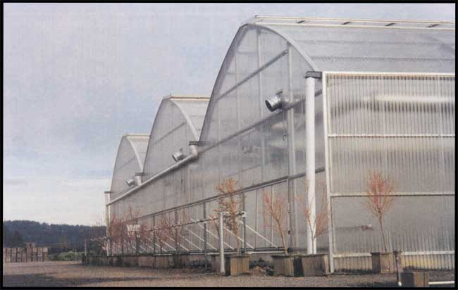 Quonsetter 6500 greenhouse