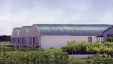Shades crop and reduces heat in greenhouse