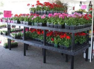 Multi-level Display Benches
